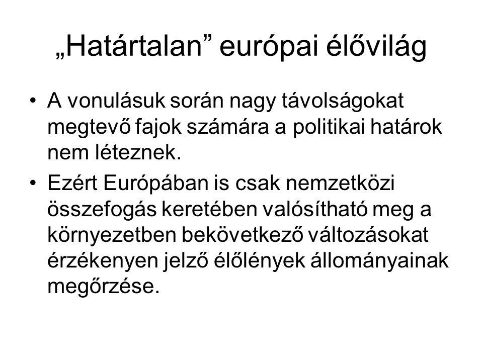 """""""Határtalan európai élővilág A vonulásuk során nagy távolságokat megtevő fajok számára a politikai határok nem léteznek."""