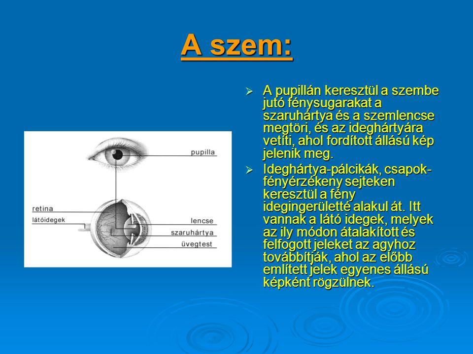 1, Az optikai egység: A k.l.f. optikai egységek –objektívek- az emberi szemet működtetőmechanizmusokkal hasonlatosak. Ismerkedjünk meg tehát egy egész