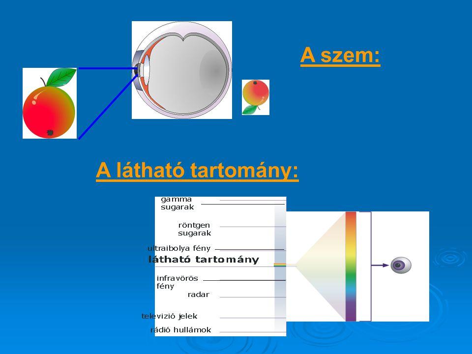 A szem:  A pupillán keresztül a szembe jutó fénysugarakat a szaruhártya és a szemlencse megtöri, és az ideghártyára vetíti, ahol fordított állású kép