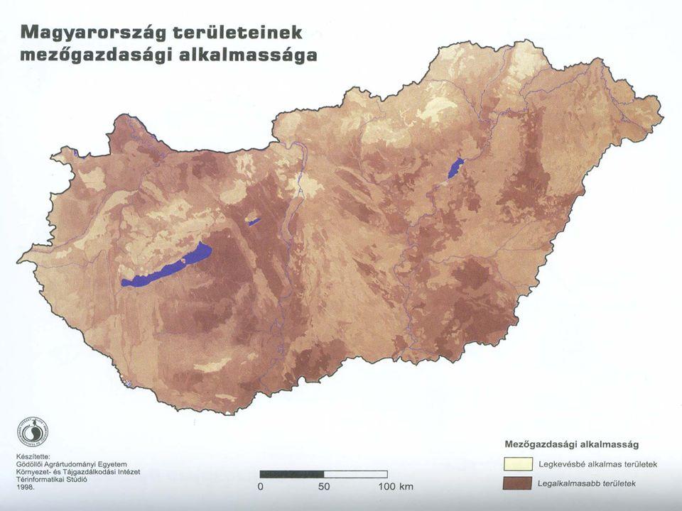 A búza termelésének gazdasági kérdései 2006-ban