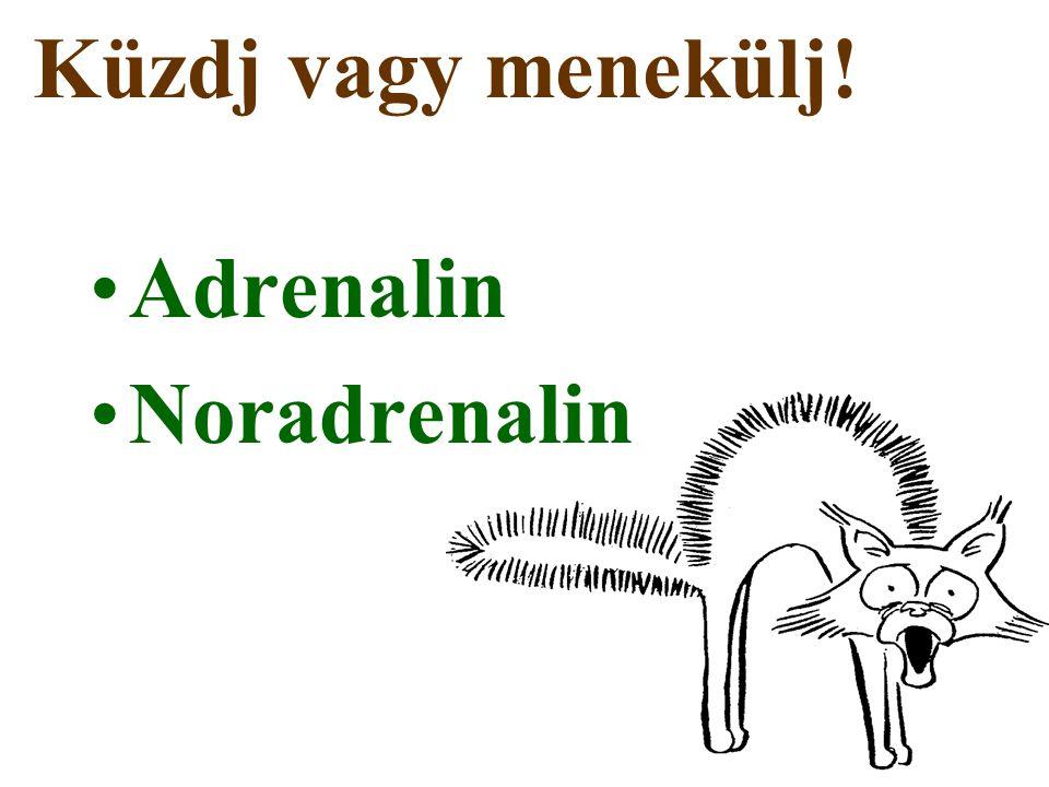 Adrenalin Noradrenalin