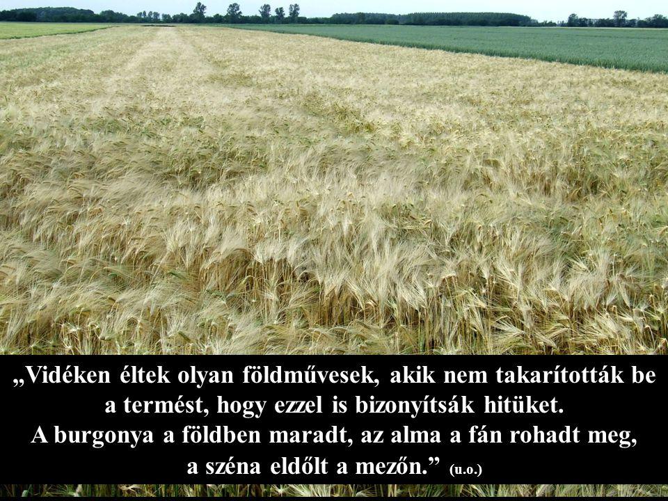 """""""Vidéken éltek olyan földművesek, akik nem takarították be a termést, hogy ezzel is bizonyítsák hitüket."""