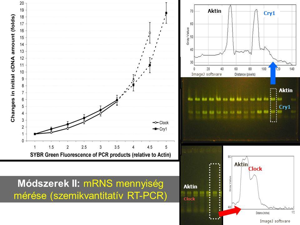 A cry1 és cry2 óragének 24 órás mRNS-expressziós mintázata normál fény/sötét környezetben tartott csirkék tobozmirigyében - A cry1 és cry2 mRNS-expresszió in vivo a nappal/éjszaka átmenetnél mutat csúcsot - A cry1 mRNS-expresszió in vitro és in vivo hasonló 24 órás mintázatot mutat - A cry2 mRNS-expresszió in vitro és in vivo 12 órával eltérő 24 órás mintázatot mutat Relatív cry1 mRNS mennyiség cry1 in vivo in vitro Relatív cry2 mRNS mennyiség Időpont cry2