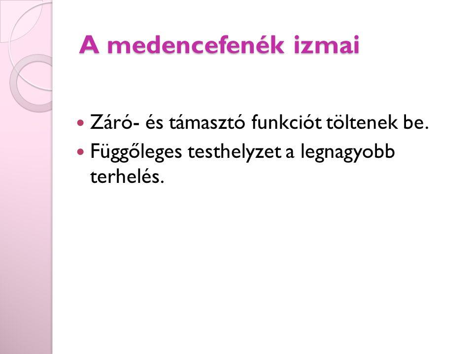 A medencefenék izmai Záró- és támasztó funkciót töltenek be.