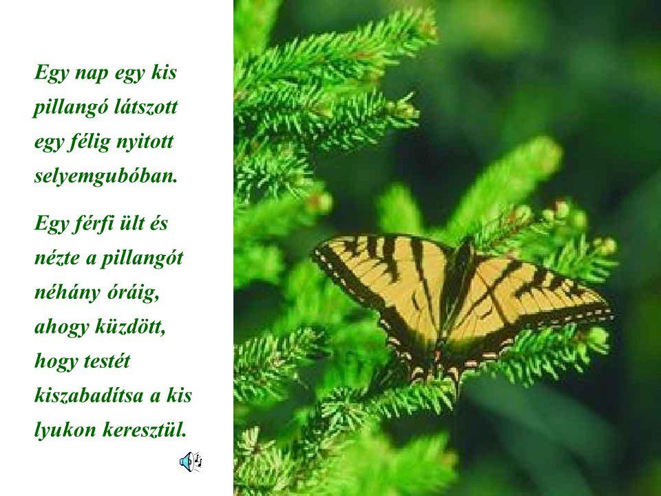 Egy nap egy kis pillangó látszott egy félig nyitott selyemgubóban. Egy férfi ült és nézte a pillangót néhány óráig, ahogy küzdött, hogy testét kiszaba