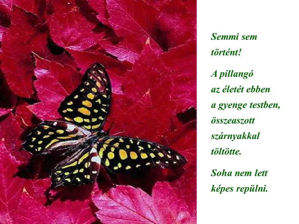 Semmi sem történt! A pillangó az életét ebben a gyenge testben, összeaszott szárnyakkal töltötte. Soha nem lett képes repülni.