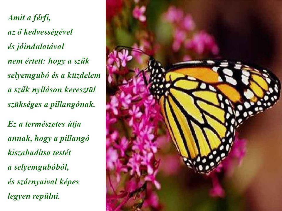 Amit a férfi, az ő kedvességével és jóindulatával nem értett: hogy a szűk selyemgubó és a küzdelem a szűk nyíláson keresztül szükséges a pillangónak.