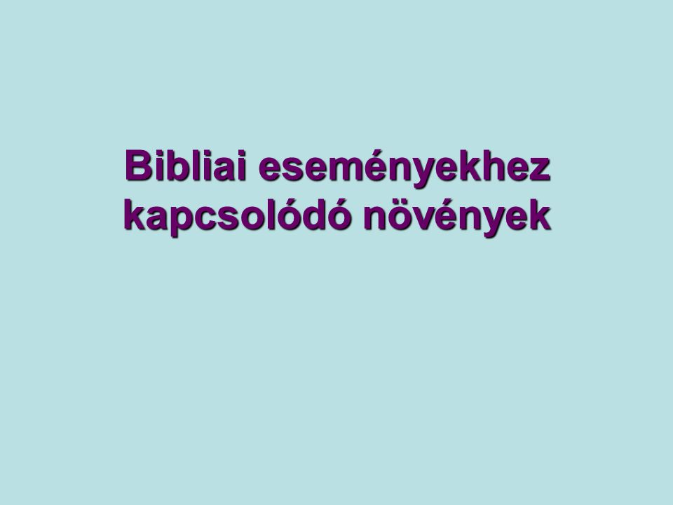 Szír krisztustövis (Ziziphus spina-christi) A hagyomány alapján feltételezhető, hogy a tövisek, melyekből Jézus koronáját fonták a szír krisztustövis hajtásain voltak.