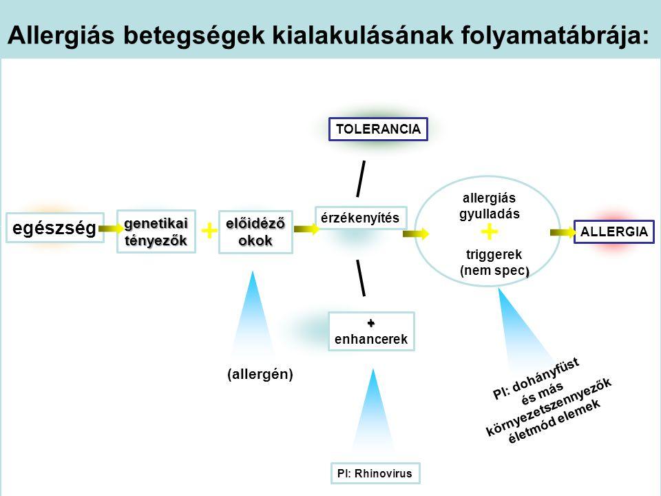 előidéző okok Allergiás betegségek kialakulásának folyamatábrája: egészség érzékenyítés ALLERGIA genetikai tényezők TOLERANCIA + enhancerek (allergén)