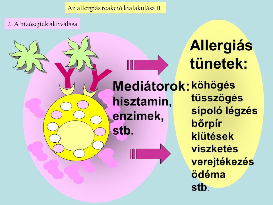 Allergiás tünetek: köhögés tüsszögés sípoló légzés bőrpír kiütések viszketés verejtékezés ödéma stb. Mediátorok: hisztamin, enzimek, stb. Y Y Az aller