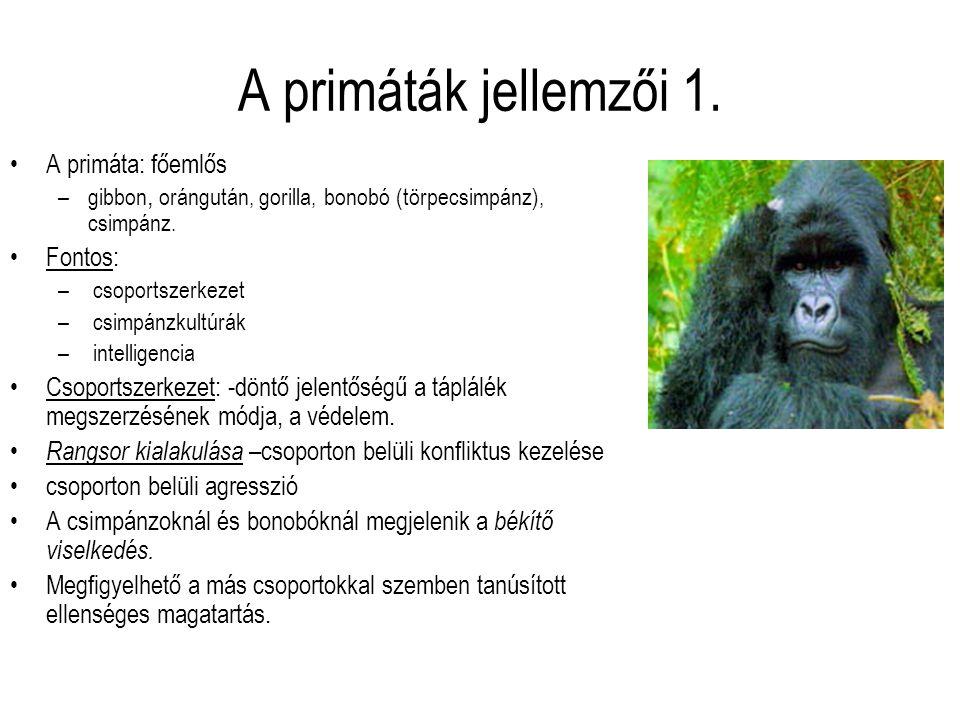 A primáták jellemzői 1. A primáta: főemlős –gibbon, orángután, gorilla, bonobó (törpecsimpánz), csimpánz. Fontos: – csoportszerkezet – csimpánzkultúrá