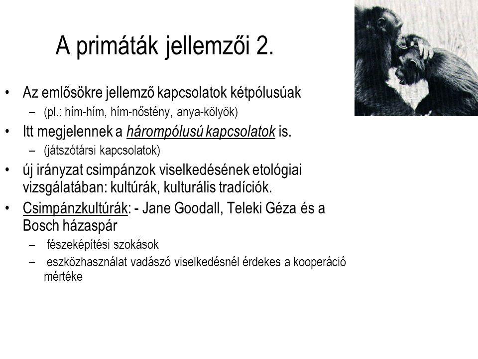 A primáták jellemzői 2. Az emlősökre jellemző kapcsolatok kétpólusúak –(pl.: hím-hím, hím-nőstény, anya-kölyök) Itt megjelennek a hárompólusú kapcsola