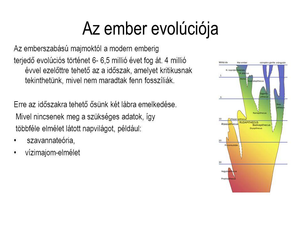 Az ember evolúciója Az emberszabású majmoktól a modern emberig terjedő evolúciós történet 6- 6,5 millió évet fog át. 4 millió évvel ezelőttre tehető a