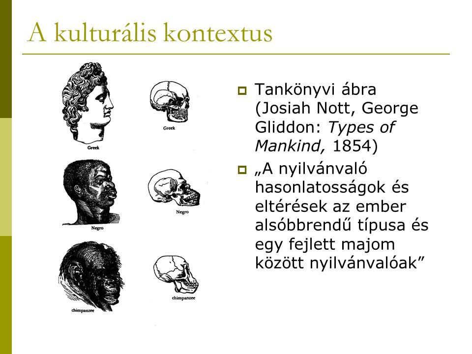 """ Tankönyvi ábra (Josiah Nott, George Gliddon: Types of Mankind, 1854)  """"A nyilvánvaló hasonlatosságok és eltérések az ember alsóbbrendű típusa és egy fejlett majom között nyilvánvalóak"""