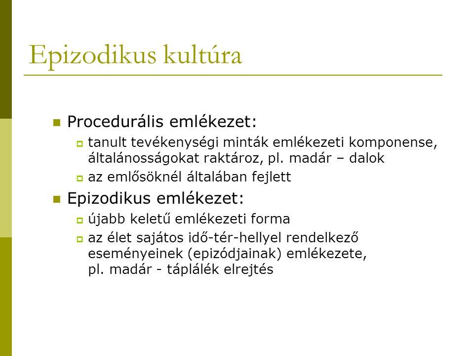 Epizodikus kultúra Procedurális emlékezet:  tanult tevékenységi minták emlékezeti komponense, általánosságokat raktároz, pl. madár – dalok  az emlős