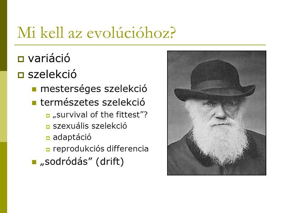 """Mi kell az evolúcióhoz?  variáció  szelekció mesterséges szelekció természetes szelekció  """"survival of the fittest""""?  szexuális szelekció  adaptá"""