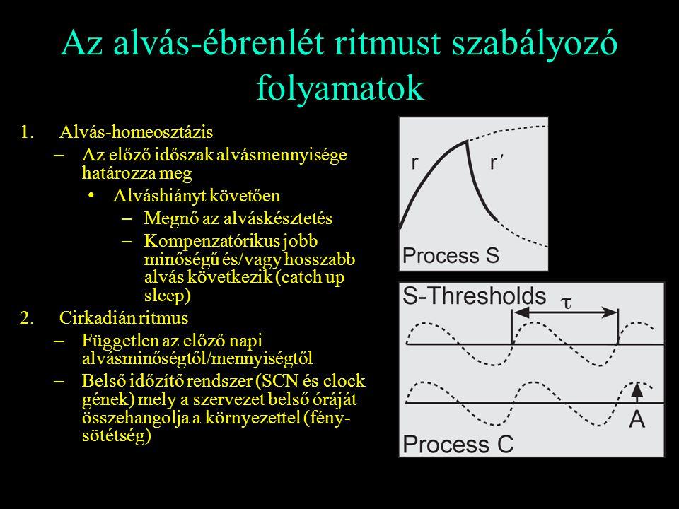 Az alvás-ébrenlét ritmust szabályozó folyamatok 1.Alvás-homeosztázis – Az előző időszak alvásmennyisége határozza meg Alváshiányt követően – Megnő az