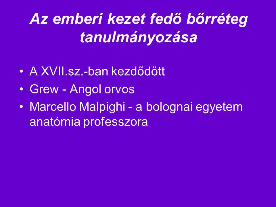 Az emberi kezet fedő bőrréteg tanulmányozása A XVII.sz.-ban kezdődött Grew - Angol orvos Marcello Malpighi - a bolognai egyetem anatómia professzora