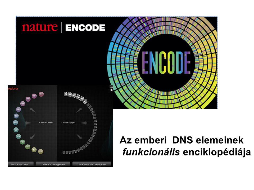 Az emberi DNS elemeinek funkcionális enciklopédiája
