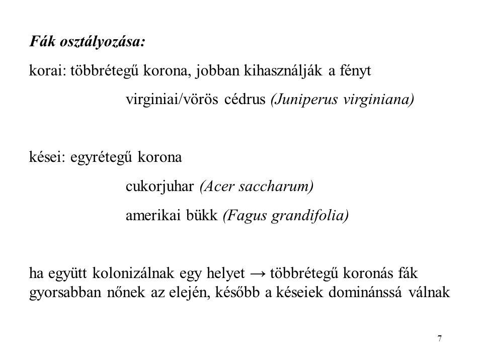 7 Fák osztályozása: korai: többrétegű korona, jobban kihasználják a fényt virginiai/vörös cédrus (Juniperus virginiana) kései: egyrétegű korona cukorj
