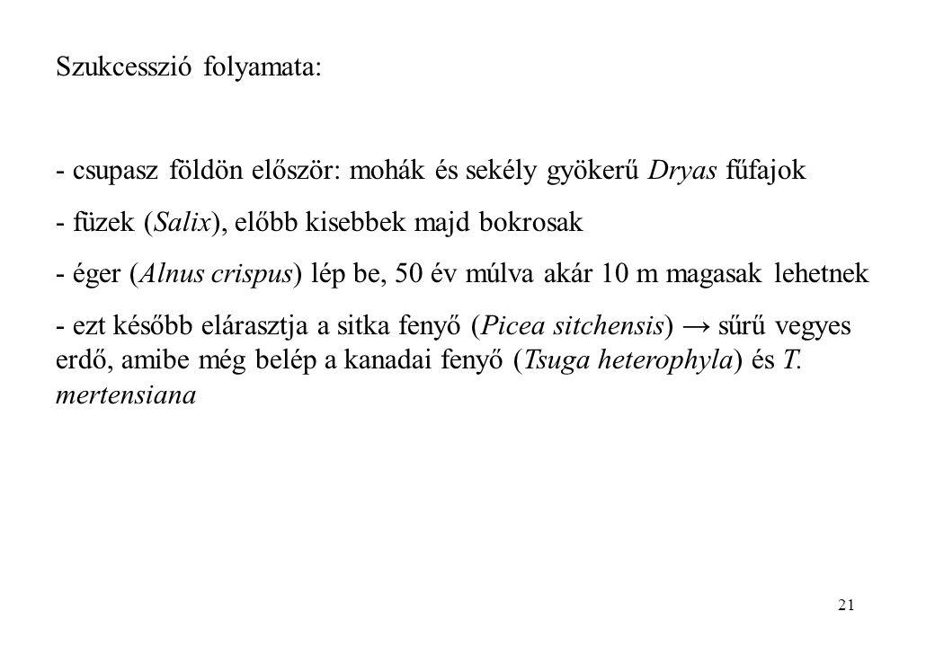 21 Szukcesszió folyamata: - csupasz földön először: mohák és sekély gyökerű Dryas fűfajok - füzek (Salix), előbb kisebbek majd bokrosak - éger (Alnus