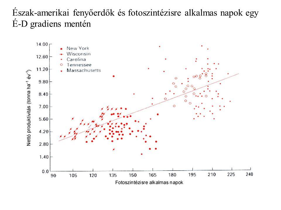 Kontraszt a lombhullató bükk (Fagus sylvatica) és lucfenyő (Picea abies) között bükk: - nagyobb fotoszintézis ráta, még az árnyékban levő leveleknél is nagyobb mint az egyéves fenyőtűknél - sokat fektet minden évben a biomassza produkcióba (új levelek) fenyő: - hosszabb a növekedési időszak - pozitív CO 2 felvétel 260 napon át (vs.
