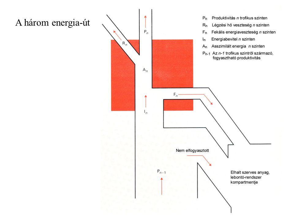 NPPElhalt szerves anyag H v H i D M C v C i Mi C v C i Tetemek és ürülék R R R R R R Tápláléklánc és energiaáramlás általános modellje terresztris közösségben v – gerinces i – gerinctelen H – herbivor C – húsevő D – detritivor M – mikro- organizmus Mi – mikro- bivor R - respiráció