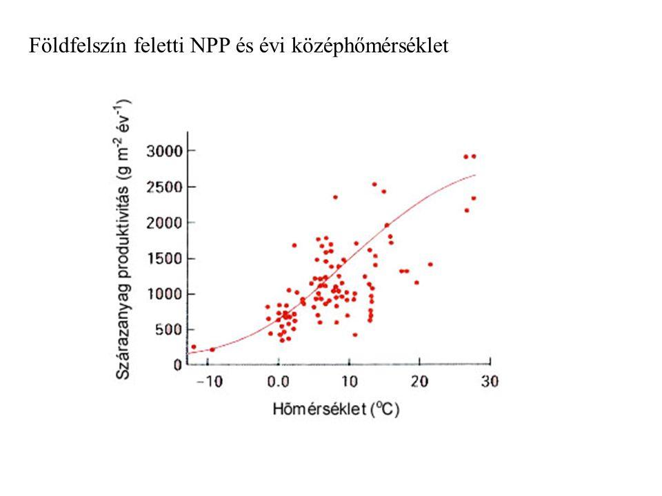ha hőmérséklet nő, nő a bruttó fotoszintézis is de: légzés a hőmérséklet növekedésével exponenciálisan nő → nettó fotoszintézis maximuma jóval a bruttóé alatt van magasabb hőmérsékleten a transpiráció is nő → gyorsabban fogy a víz