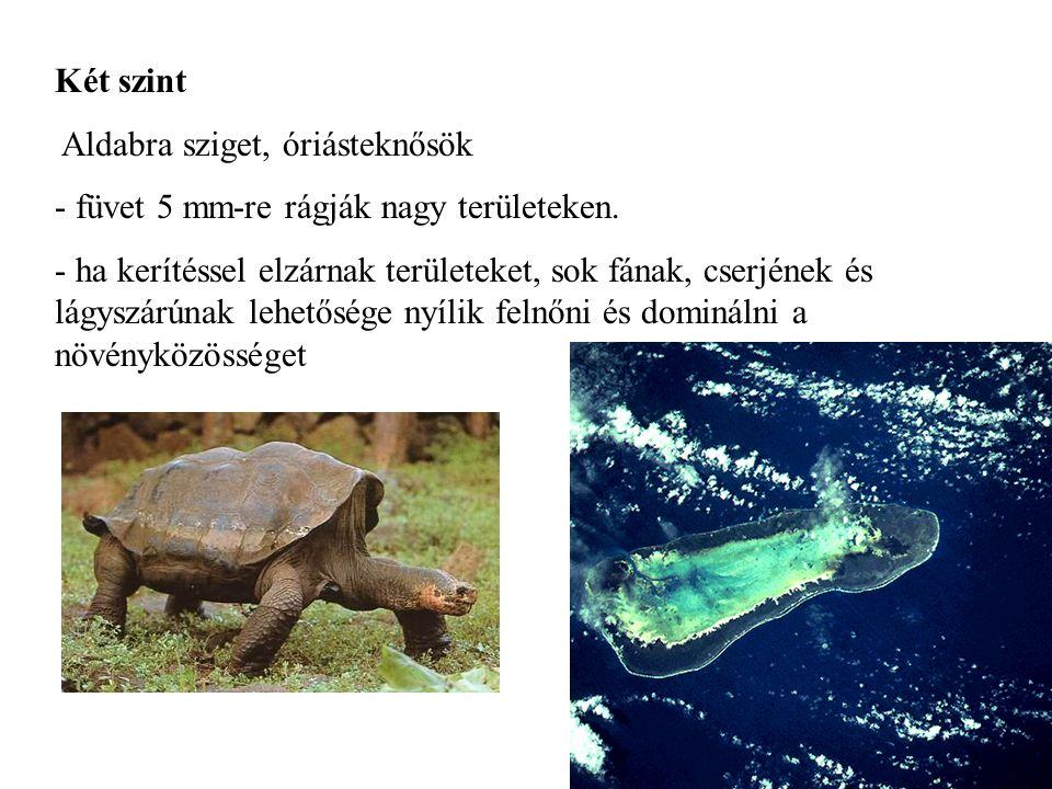 Két szint Aldabra sziget, óriásteknősök - füvet 5 mm-re rágják nagy területeken. - ha kerítéssel elzárnak területeket, sok fának, cserjének és lágyszá