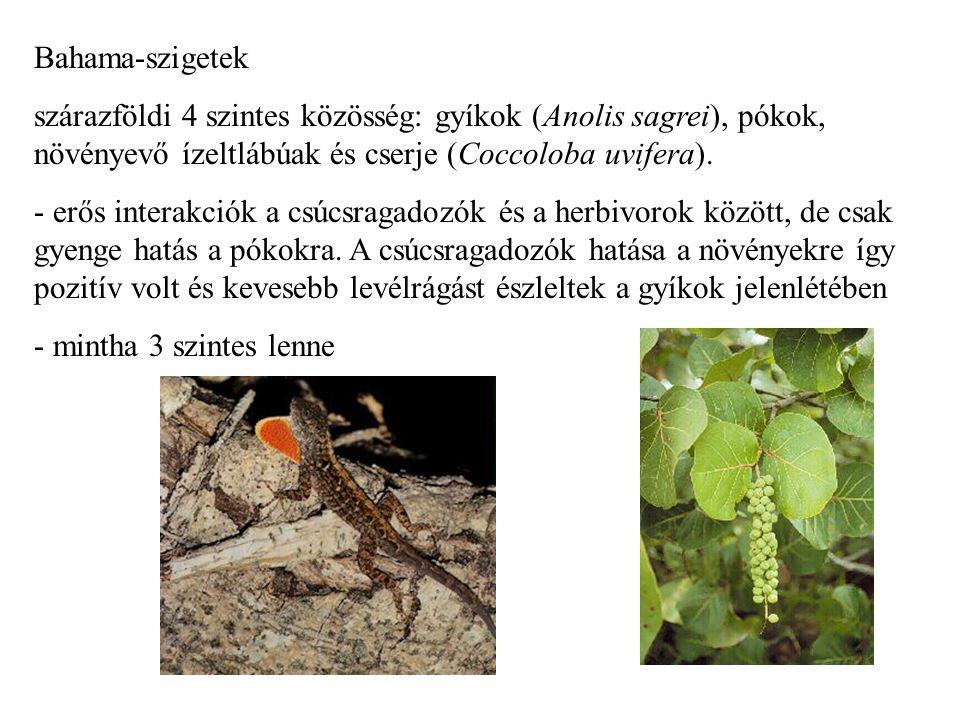 Bahama-szigetek szárazföldi 4 szintes közösség: gyíkok (Anolis sagrei), pókok, növényevő ízeltlábúak és cserje (Coccoloba uvifera). - erős interakciók