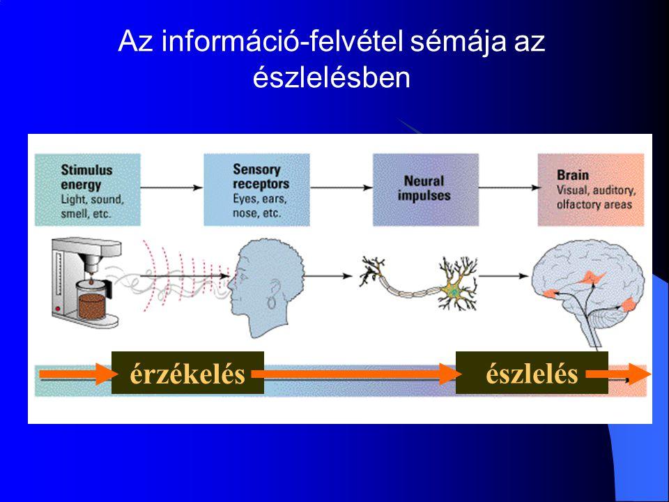 Az információ-felvétel sémája az észlelésben érzékelés észlelés