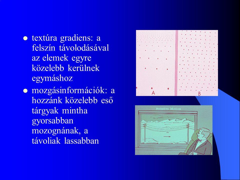 textúra gradiens: a felszín távolodásával az elemek egyre közelebb kerülnek egymáshoz mozgásinformációk: a hozzánk közelebb eső tárgyak mintha gyorsab