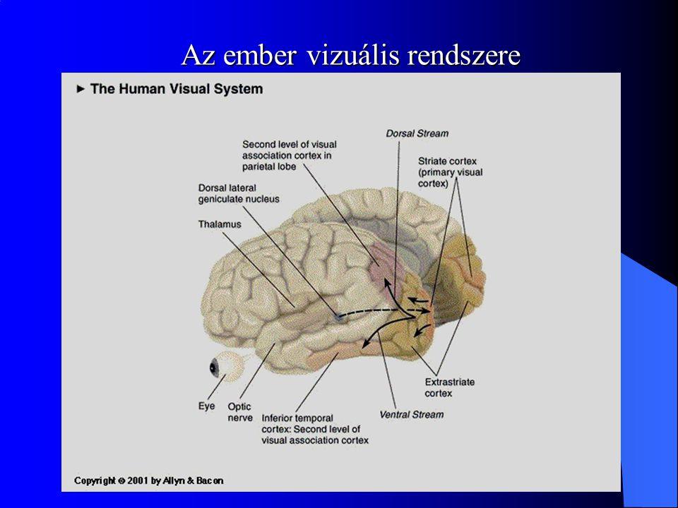 Az ember vizuális rendszere