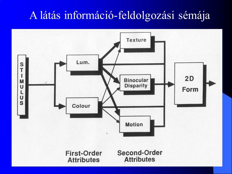 A látás információ-feldolgozási sémája