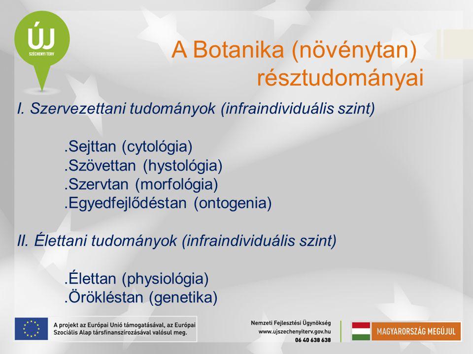 I. Szervezettani tudományok (infraindividuális szint).Sejttan (cytológia).Szövettan (hystológia).Szervtan (morfológia).Egyedfejlődéstan (ontogenia) II