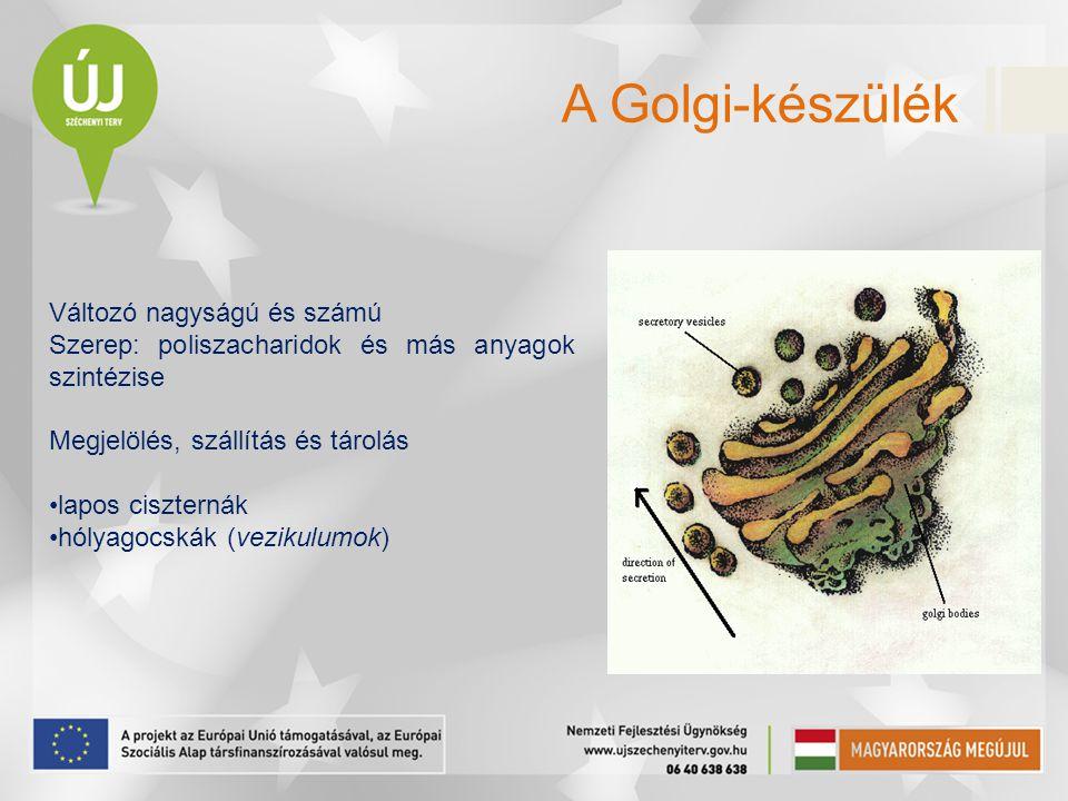 Változó nagyságú és számú Szerep: poliszacharidok és más anyagok szintézise Megjelölés, szállítás és tárolás lapos ciszternák hólyagocskák (vezikulumo