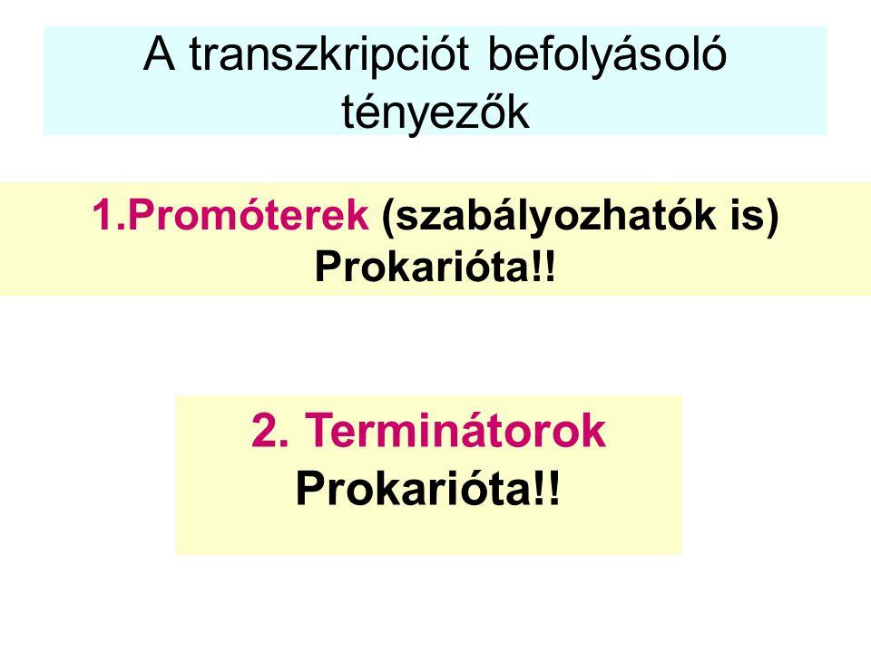 A transzkripciót befolyásoló tényezők 1.Promóterek (szabályozhatók is) Prokarióta!! 2. Terminátorok Prokarióta!!