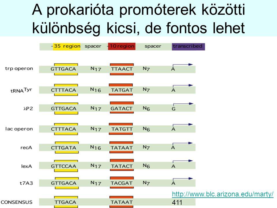A prokarióta promóterek közötti különbség kicsi, de fontos lehet http://www.blc.arizona.edu/marty/ 411