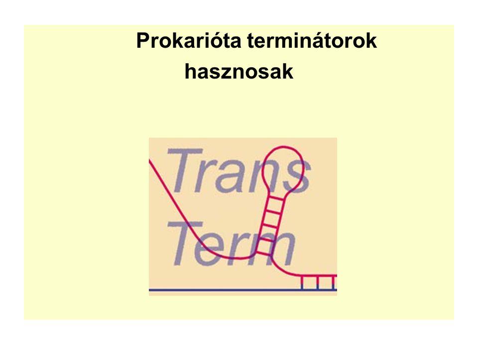 Prokarióta terminátorok hasznosak