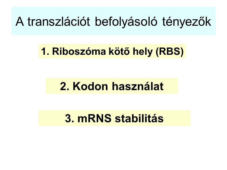 A transzlációt befolyásoló tényezők 1. Riboszóma kötő hely (RBS) 2. Kodon használat 3. mRNS stabilitás