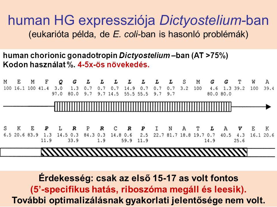 human HG expressziója Dictyostelium-ban (eukarióta példa, de E. coli-ban is hasonló problémák) human chorionic gonadotropin Dictyostelium –ban (AT >75