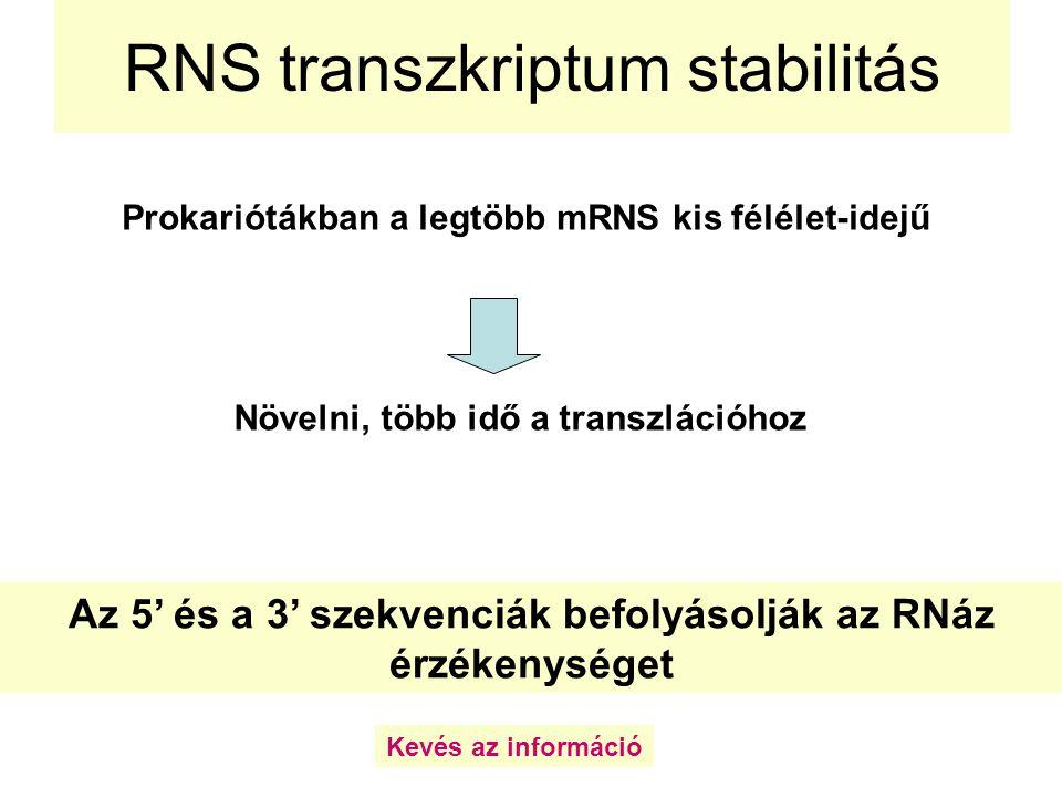 RNS transzkriptum stabilitás Prokariótákban a legtöbb mRNS kis félélet-idejű Növelni, több idő a transzlációhoz Az 5' és a 3' szekvenciák befolyásoljá
