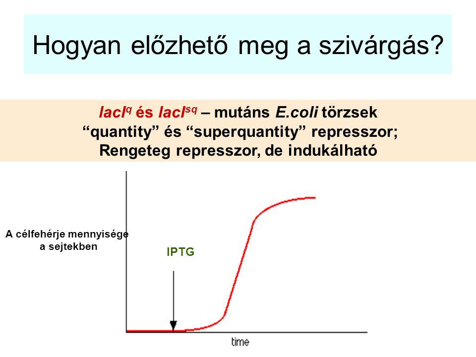 """Hogyan előzhető meg a szivárgás? lacI q és lacI sq – mutáns E.coli törzsek """"quantity"""" és """"superquantity"""" represszor; Rengeteg represszor, de indukálha"""