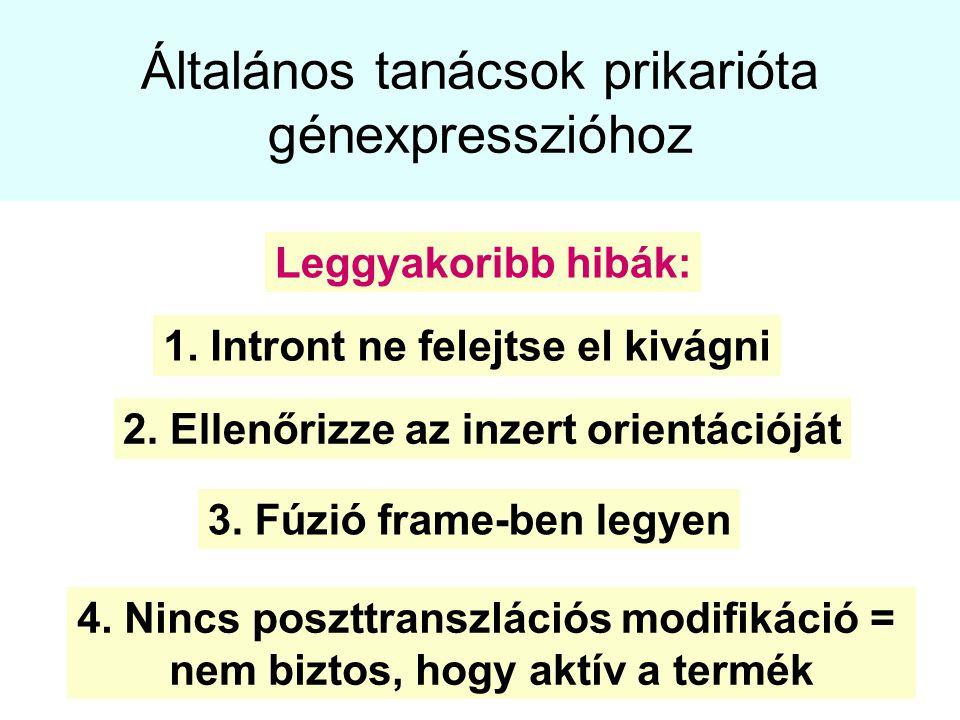 Általános tanácsok prikarióta génexpresszióhoz 1. Intront ne felejtse el kivágni 2. Ellenőrizze az inzert orientációját 3. Fúzió frame-ben legyen Legg