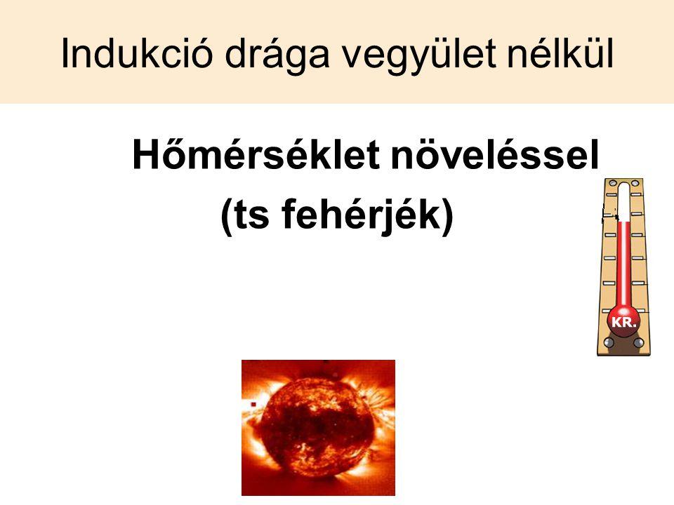 Indukció drága vegyület nélkül Hőmérséklet növeléssel (ts fehérjék)