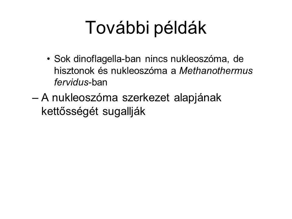 További példák Sok dinoflagella-ban nincs nukleoszóma, de hisztonok és nukleoszóma a Methanothermus fervidus-ban –A nukleoszóma szerkezet alapjának ke