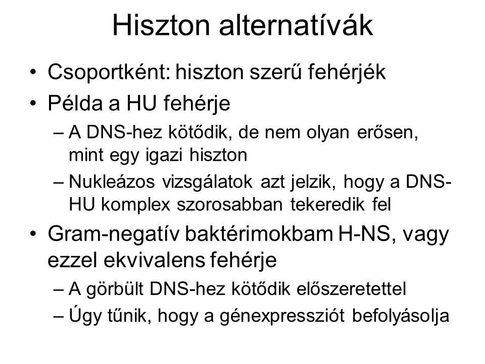 Hiszton alternatívák Csoportként: hiszton szerű fehérjék Példa a HU fehérje –A DNS-hez kötődik, de nem olyan erősen, mint egy igazi hiszton –Nukleázos