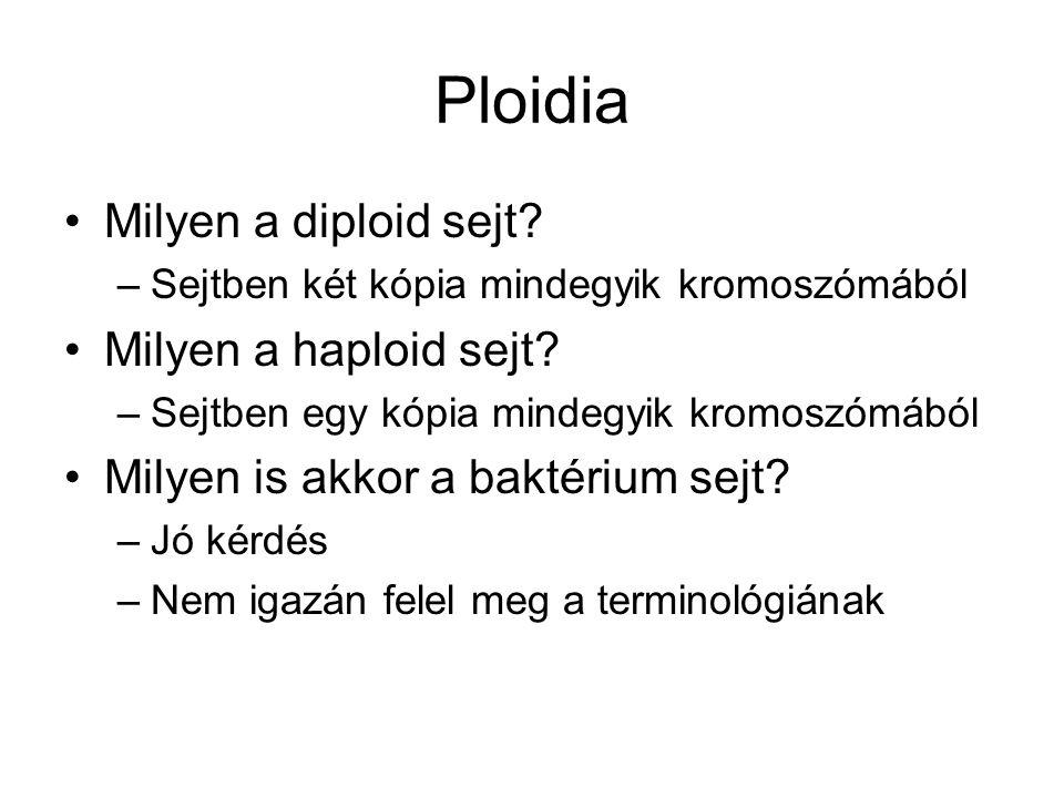 Ploidia Milyen a diploid sejt? –Sejtben két kópia mindegyik kromoszómából Milyen a haploid sejt? –Sejtben egy kópia mindegyik kromoszómából Milyen is
