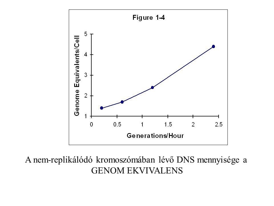A nem-replikálódó kromoszómában lévő DNS mennyisége a GENOM EKVIVALENS
