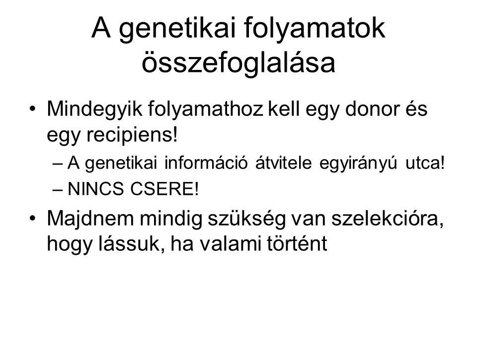 A genetikai folyamatok összefoglalása Mindegyik folyamathoz kell egy donor és egy recipiens! –A genetikai információ átvitele egyirányú utca! –NINCS C